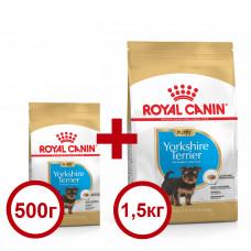 Royal Canin Yorkshire Puppy 1,5кг-корм для щенков породы йоркширский терьер в возрасте до 10 месяцев1