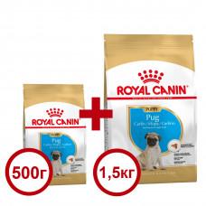 Royal Canin Pug Puppy 1,5+0,5кг - корм для цуценят мопс1