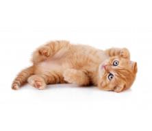 Средства от блох и клещей у кошек