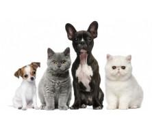 Средства от блох и клещей у домашних животных