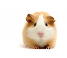 Корма для морских свинок