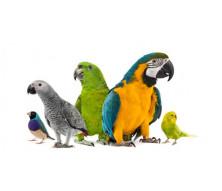 Корма для птиц 6 2