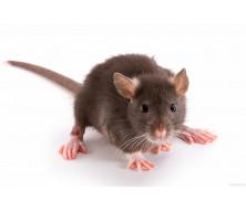 Корма для крыс
