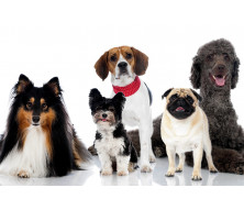 Royal Canin для собак окремих порід