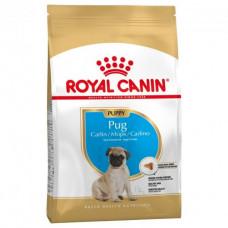 Royal Canin Pug Puppy 1,5 - корм для щенков мопс1
