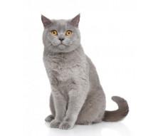 Royal Canin корм для котів