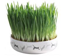 Котяча м'ята і трава для котів