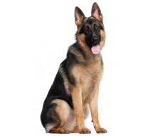 Royal Canin корма для собак