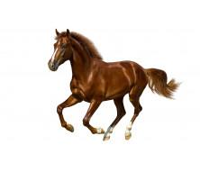Товары для лошадей 17 2